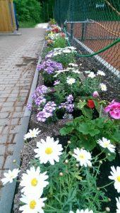 Blumen 1 small.a